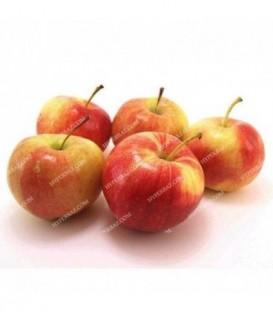 سیب گلاب فرانسوی قیمت هر بسته 2 کیلویی